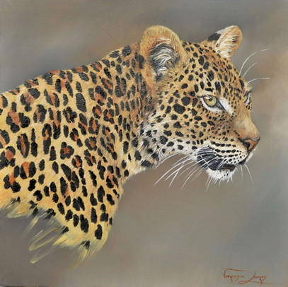 FOCUSED LEOPARD - OIL ON CANVAS - 51 x 51 cm