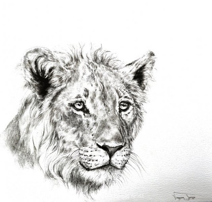 YOUNG LION - 100 x 100 cm - FRAMED
