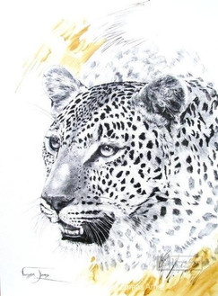 LEOPARD PORTRAIT - INDIAN INK