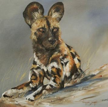 TAKING A BREAK, WILD DOG - OIL ON CANVAS - 51 x 51 cm