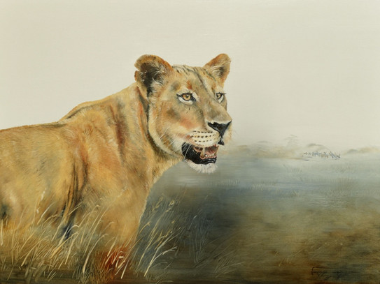 BUSHVELD QUEEN, LIONESS - OIL ON CANVAS - 76 x 102 cm