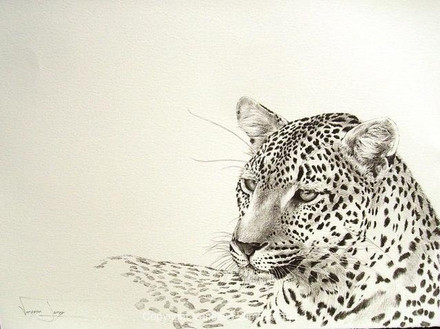 LAZY LEOPARD - INDIAN INK
