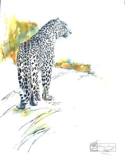 LEOPARD PROWLING - INDIAN INK & COLOUR INK - 140 X 100 cm - FRAMED