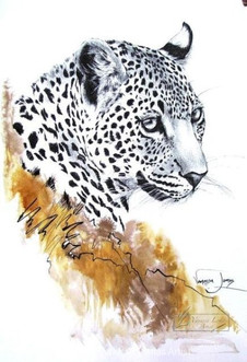 FEMALE LEOPARD PORTRAIT - INDIAN INK & COLOUR INK