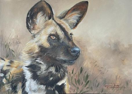 WILD DOG STUDY PORTRAIT - OIL ON 100% COTTON CANVAS - 50 x 70cm