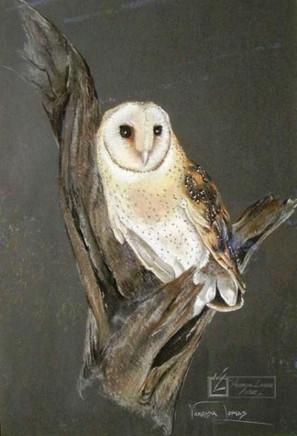 BARN OWL - PASTEL - 40 x 70 cm