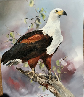 MAJESTIC FISH EAGLE - OIL ON CANVAS - 50 x 60 cm