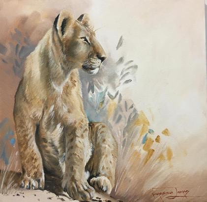 YOUNG LION - OIL ON 100 % COTTON CANVAS - 40 x 40 cm