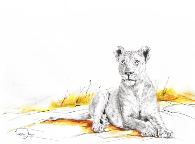 ALERT LIONESS - 120 x 100 cm - FRAMED