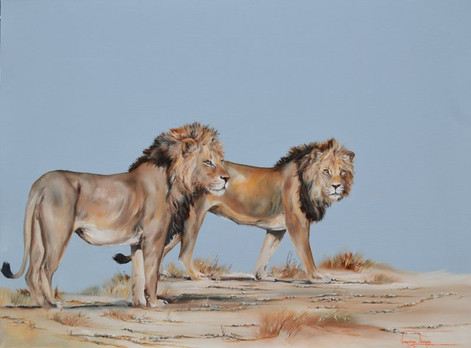BROTHERS, 2 MALE LIONS