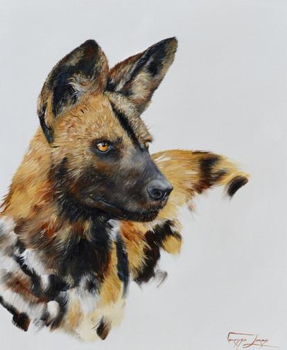 WILD DOG PORTRAIT - OIL ON CANVAS - 50 x 60 cm