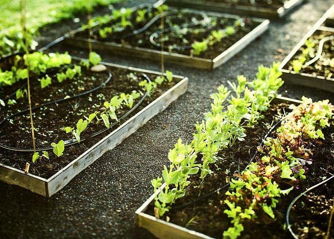 Gardening_edited.png