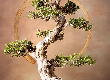 Sobre os limites e o cultivo do bonsai