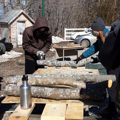 Mushroom Log Inoculation