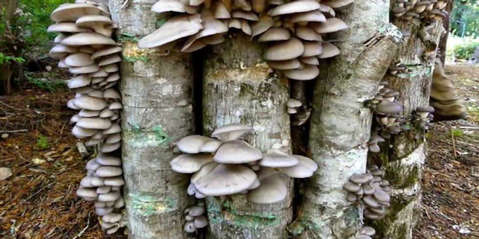 Mushroom Log Inoculation Workshop