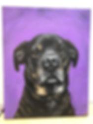 A cutsom pet portrait with a puprle background by Amanda Rose Warren