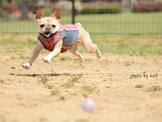 飛行犬募集@代々木公園※条件付き無料!