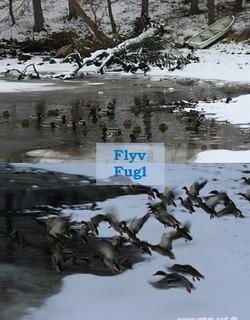 Flyv fugl