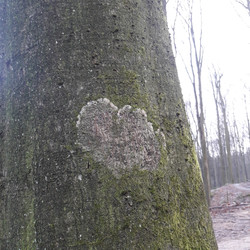 Natures Hearts
