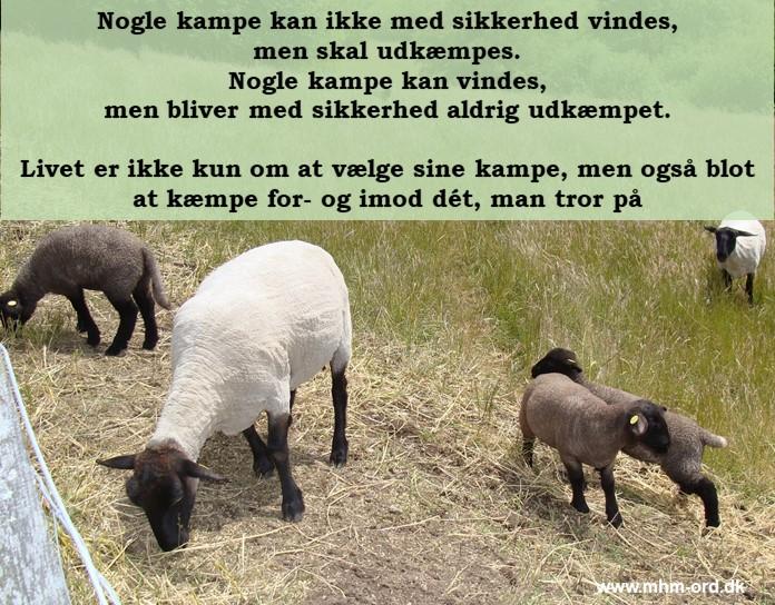 Kampe_skal_kæmpes