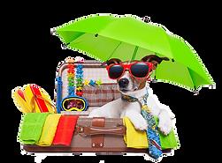 vakantie-hond.png