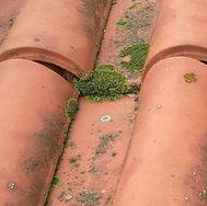 Telhado Original.jpg