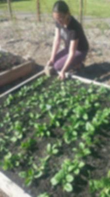 gardenVOL5.JPG