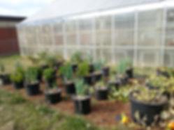 beds:potswithplants.jpg