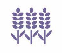 lavender-icon.jpg