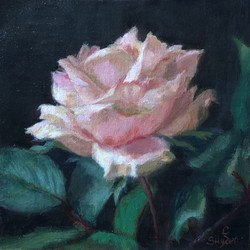 Charity Rose