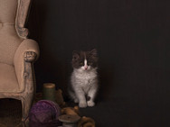 Pet Portraiture By Little Pip Photography