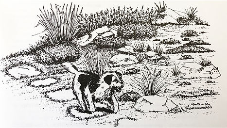 Dog on path.jpg