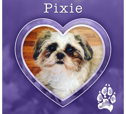 PIXIE1.jpg