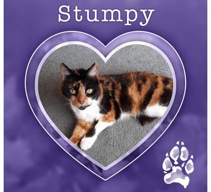 STUMPY1.jpg