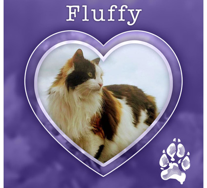 FLUFFY1.jpg