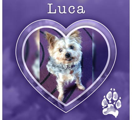 LUCA1.jpg