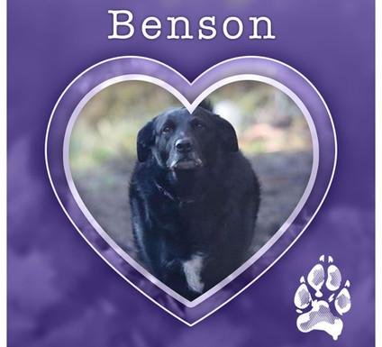BENSON1.jpg