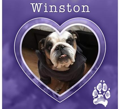 WINSTON1.jpg