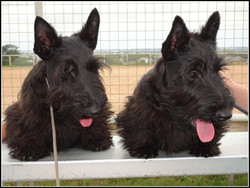 Claudon Puppies