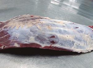 Oister Blade Schaufelstueck Oyster Blade Copertina di Spalla