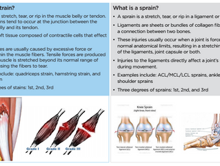 Why Tendons and Ligaments Heal More Slowly Than Muscle