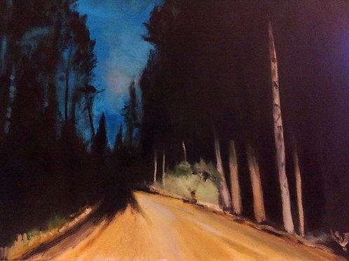 Into my dark forest