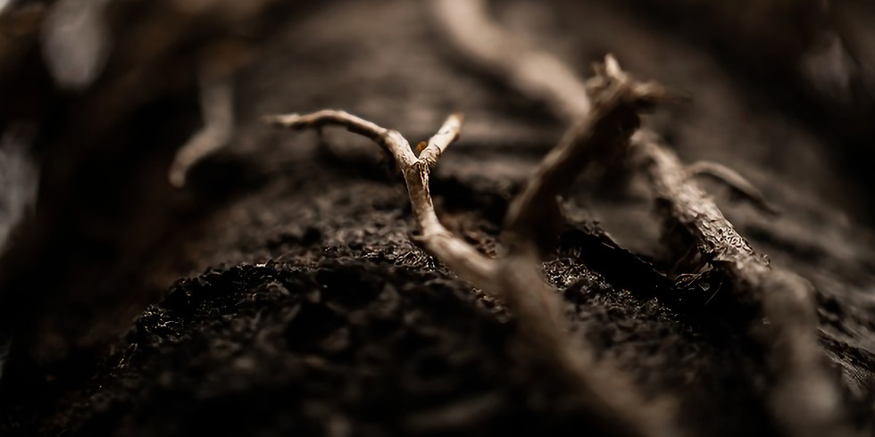 in the root: teaching + meditation