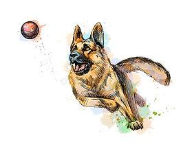 Lost Ball Canine Website logo.jpg