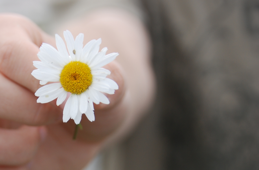 hand holding small daisy_edited.png