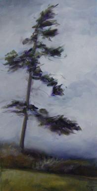 Windy Coastal Day