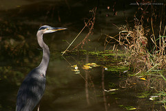 Group 1, Puzzle 04 - Heron