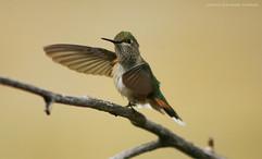Group 2, Puzzle 08 - Hummingbird