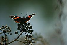 butterfly (w).jpg