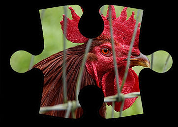 Group 2 puzzle piece image v2.jpg